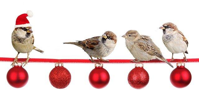 vrabci u ozdobiček