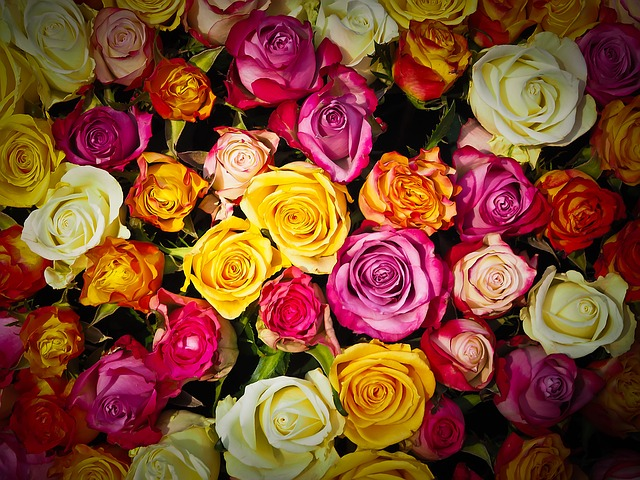 kytice růží