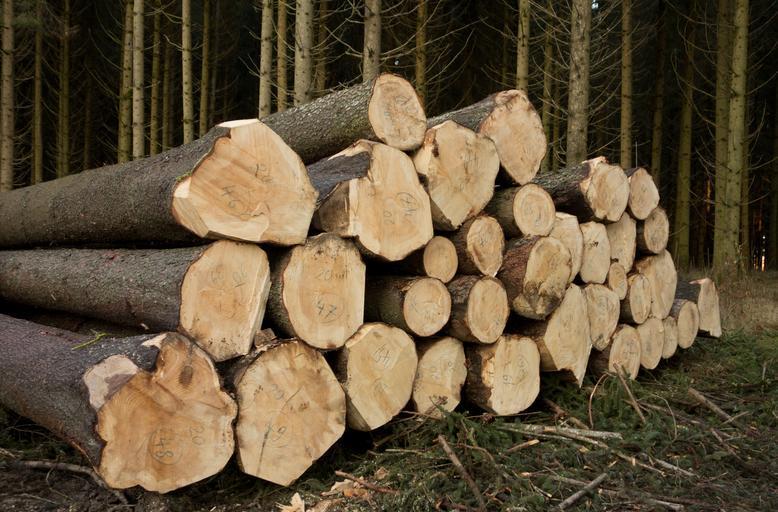 Dřevo na palety