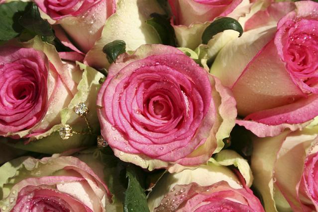 beautiful wedding roses